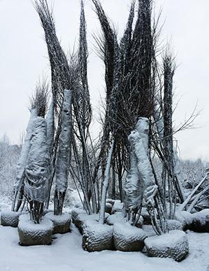 linden-saplings