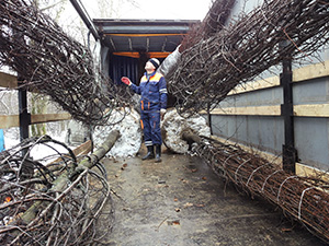 unloading-saplings